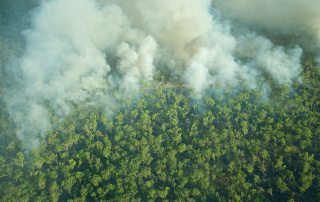 Aerial view of smoke covering the trees during a bushfire