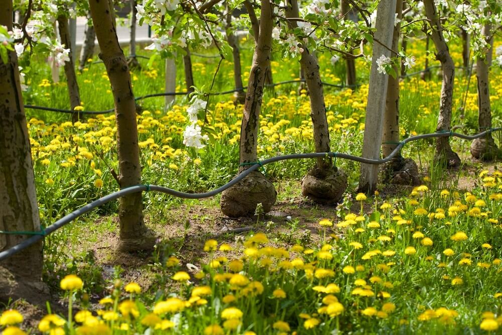 Drip Irrigation For Your Garden Rainwater Supplies Qsm