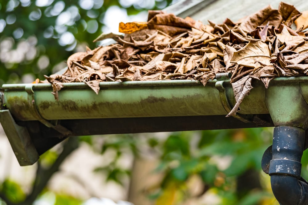 Cleaning gutters of leaves.